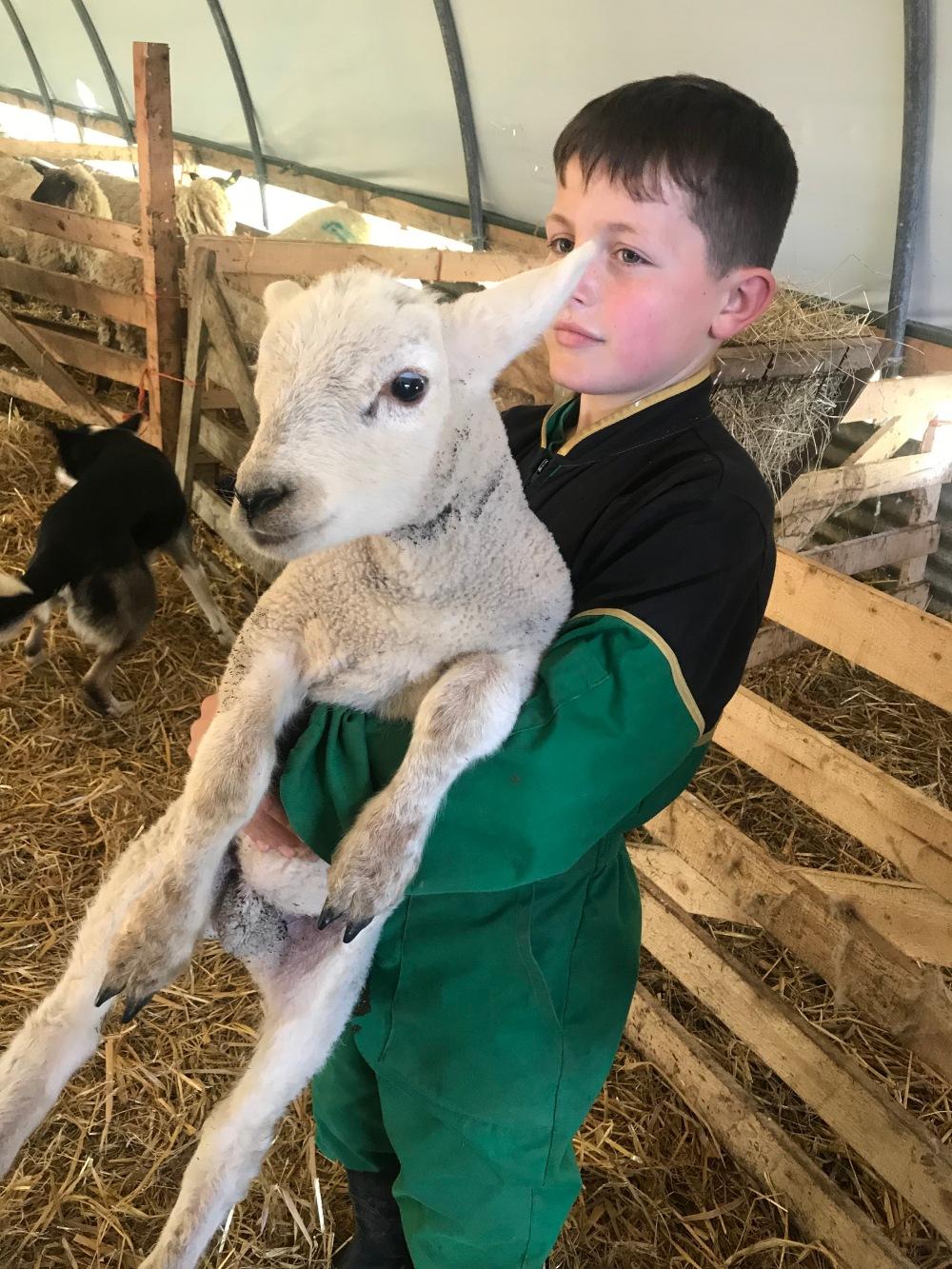 boy an sheep